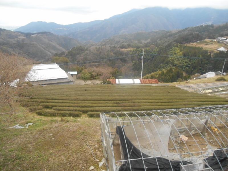 DSCN1187 1 800x600 - 徳島、阿波忌部で榮さんと再会