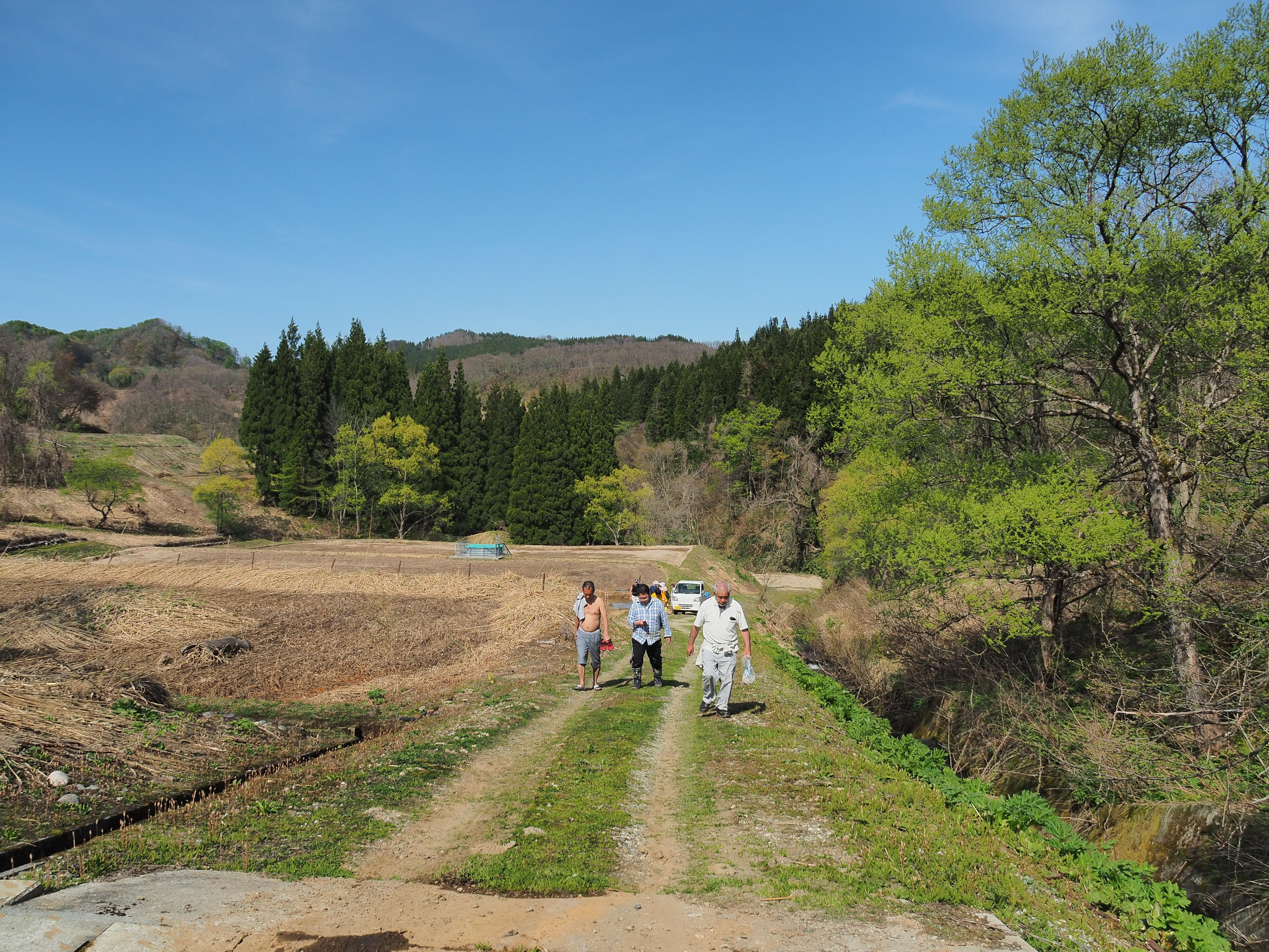 山形県戸沢村、農作業イベント クワイの植え付け