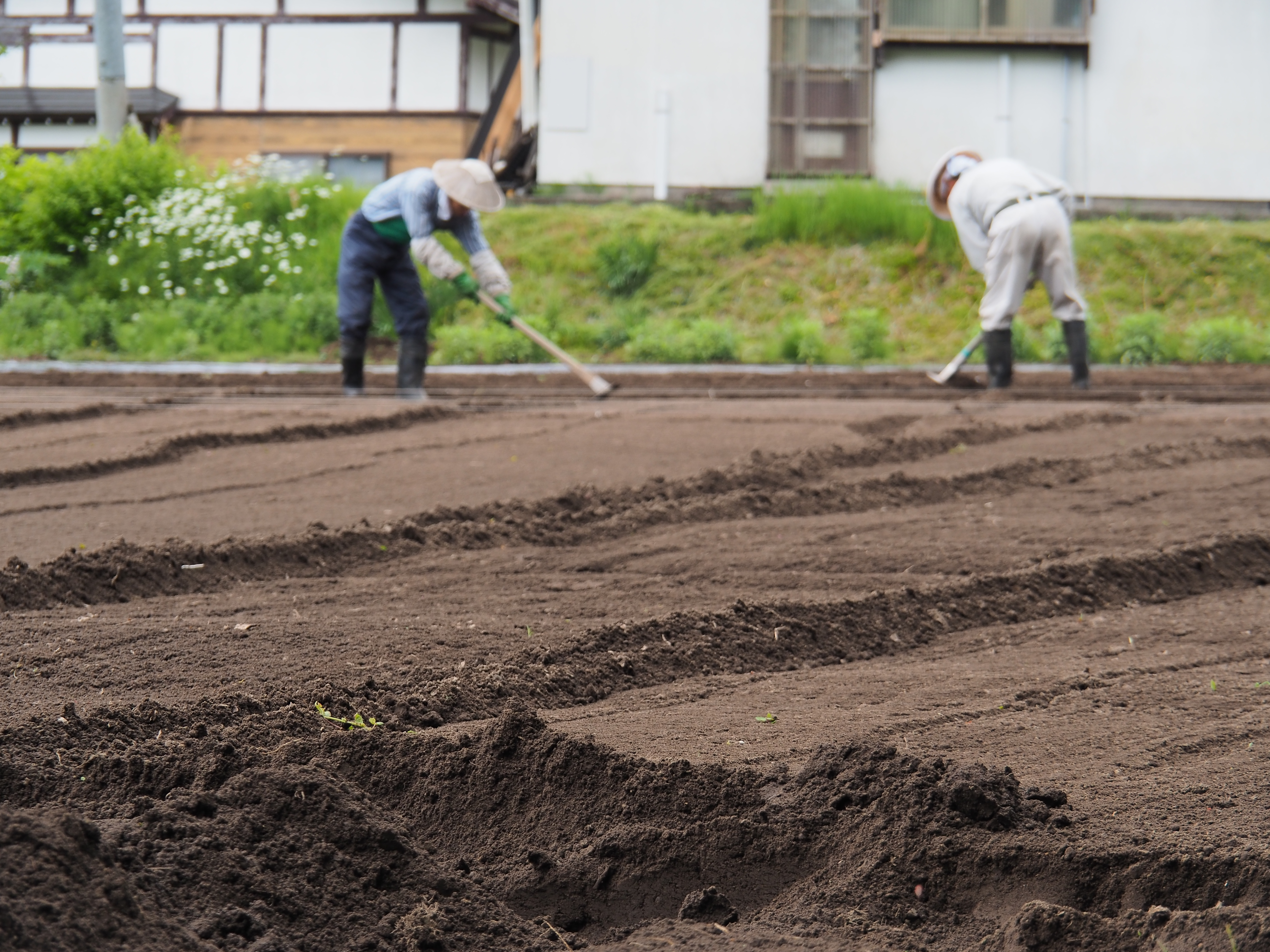 P6170007 - 山形県戸沢村での農業イベント