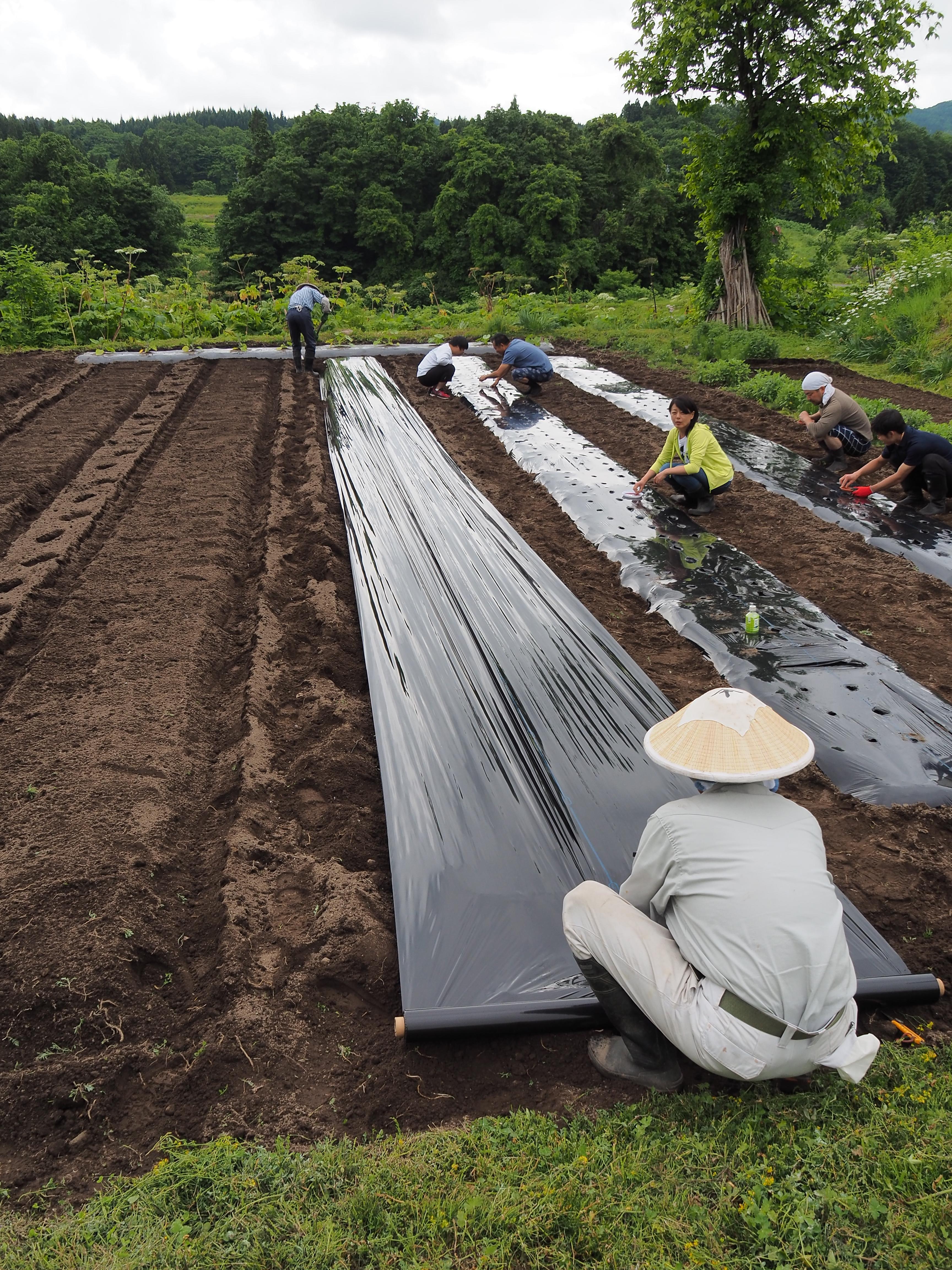 P6170043 - 山形県戸沢村での農業イベント