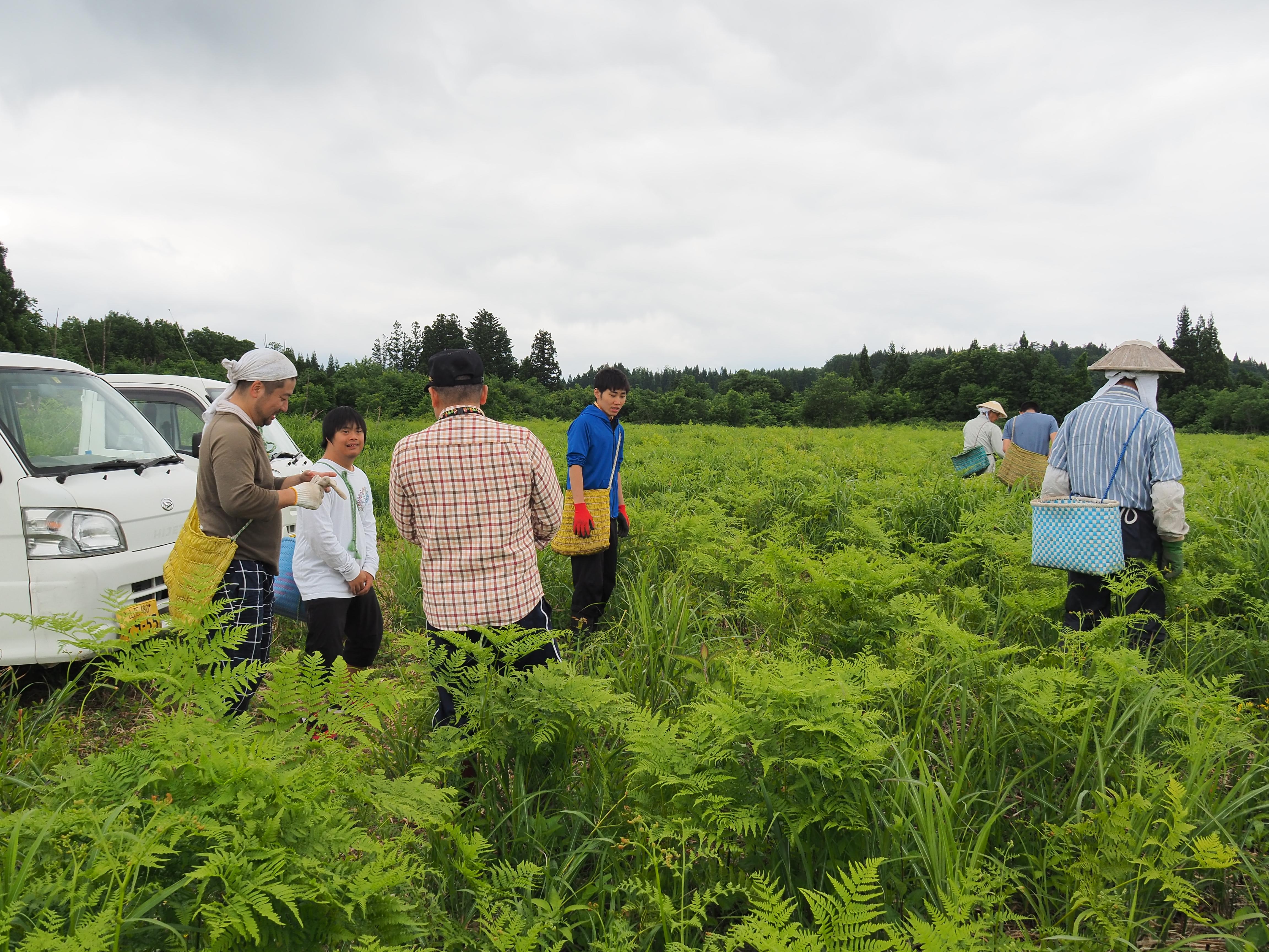 P6170083 - 山形県戸沢村での農業イベント