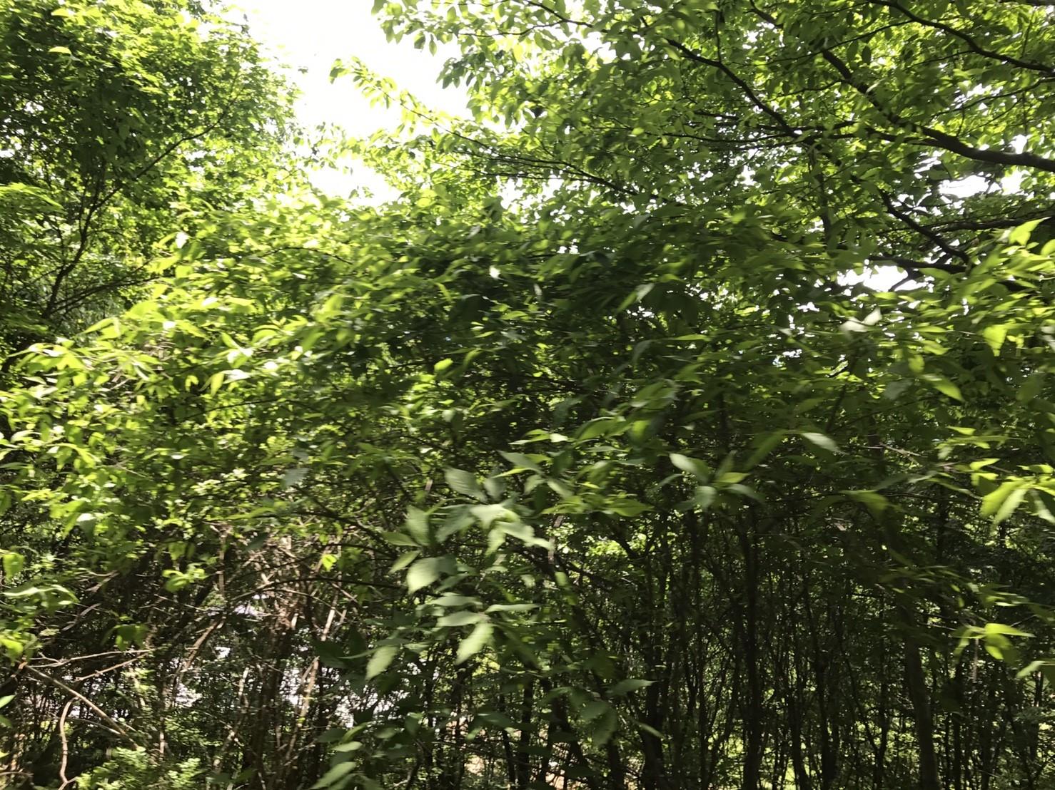 bc6c3adbd39dce40b6132027b51c84a4 - DASHA村の様なプロジェクト(群馬県神流町農場)