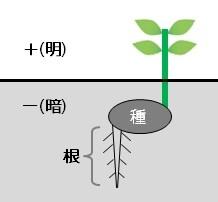 auto0667 - 今野華都子先生を講師に迎えて『透明な在り方フォーラム』開催