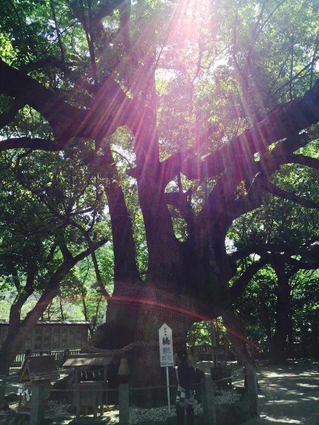11210326 894185143982343 1298176254 n - 平成30年『平成最後の秋』に巡る阿波忌部女神ツアー~日本の女神の源流を訪ねて~