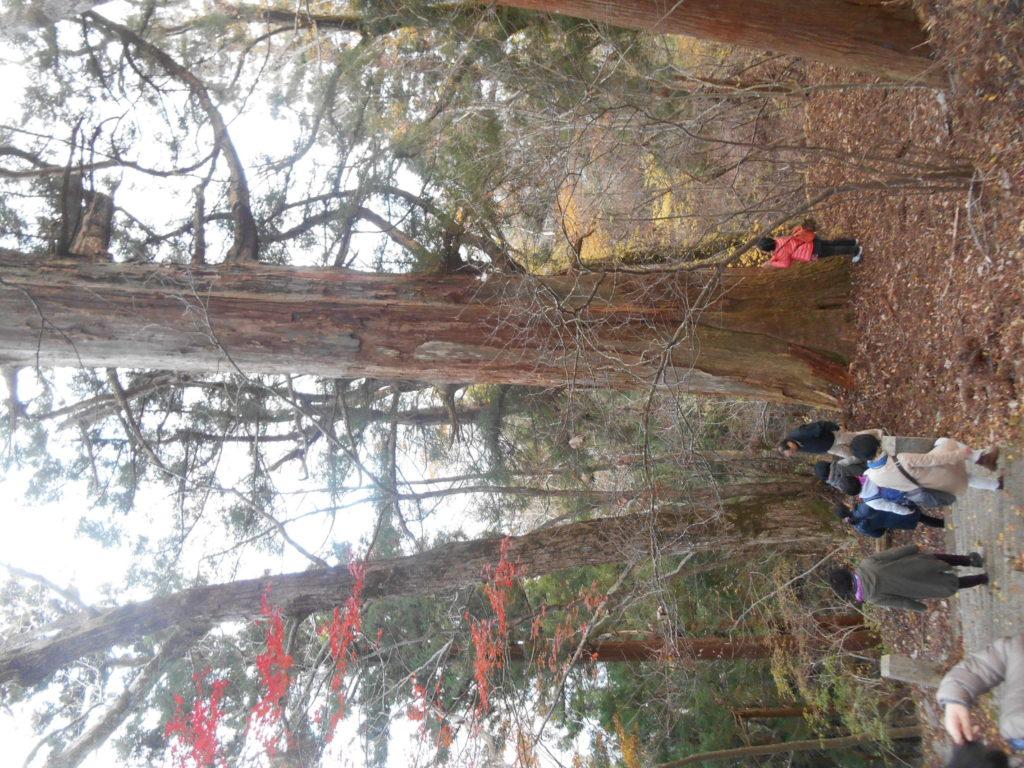DSCN2211 1024x768 - 平成30年『平成最後の秋』に巡る阿波忌部女神ツアー~日本の女神の源流を訪ねて~
